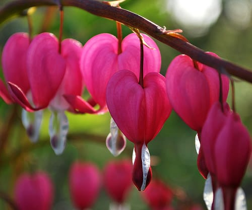 Top 10 Most Beautiful Flowers On The Planet Earth