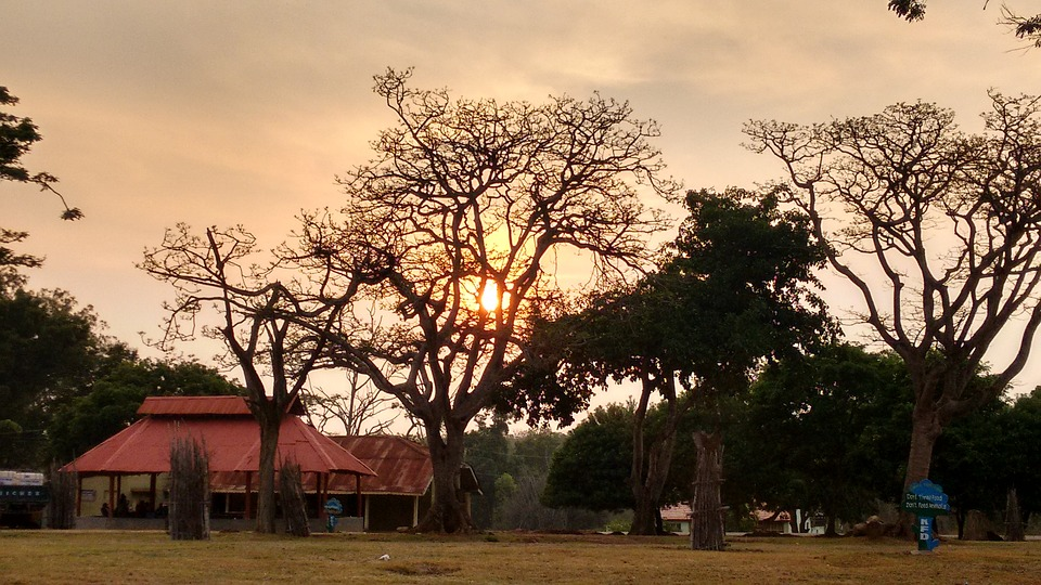 Wildlife Reserve at Bandipur at Sunset