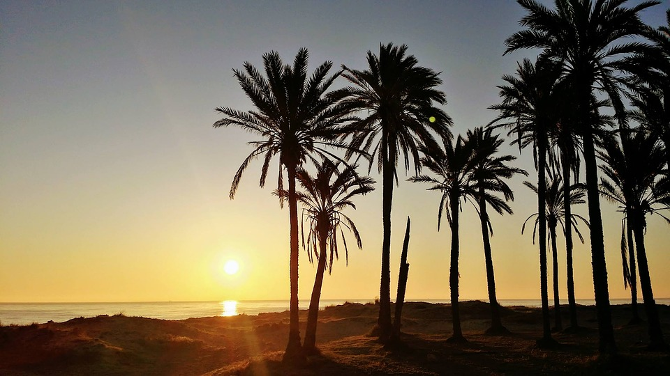 Torrevieja Palm Trees on a Beach