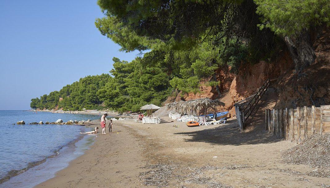 Pine Trees Providing Shade at Nikiti Beach