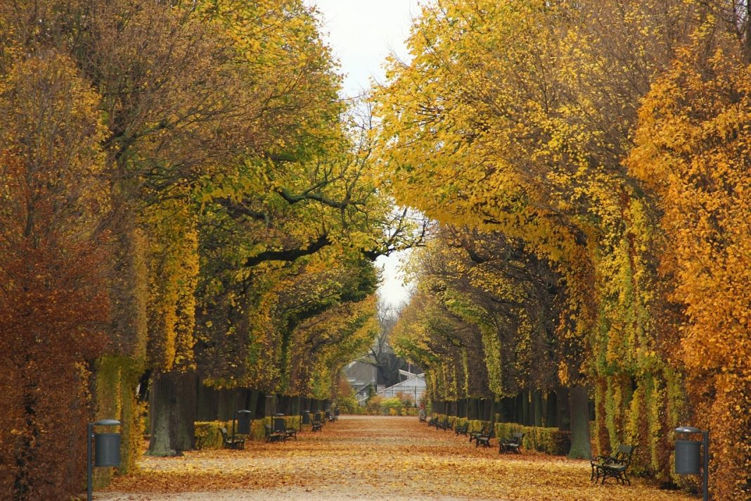 Vienna looks magnificent in the fall