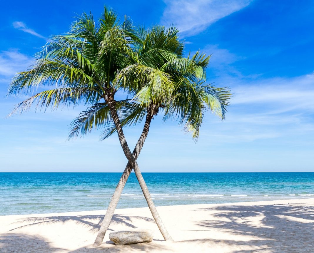 Palm trees on the beach in the Caribbean
