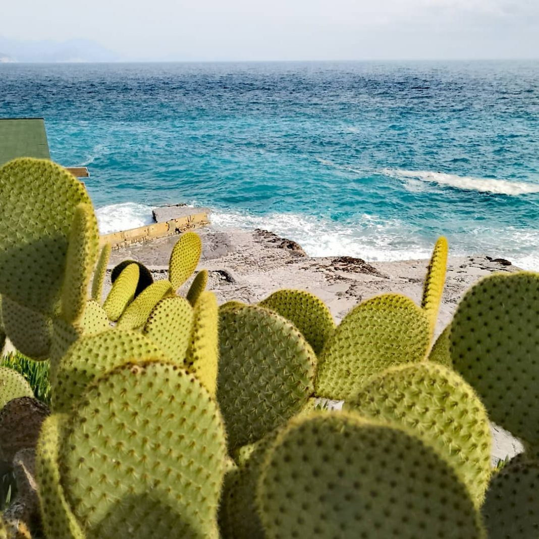 The view of Ploce Beach and the surrounding cacti