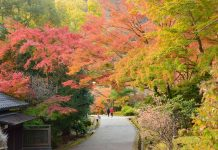 Visiting Japan in autumn